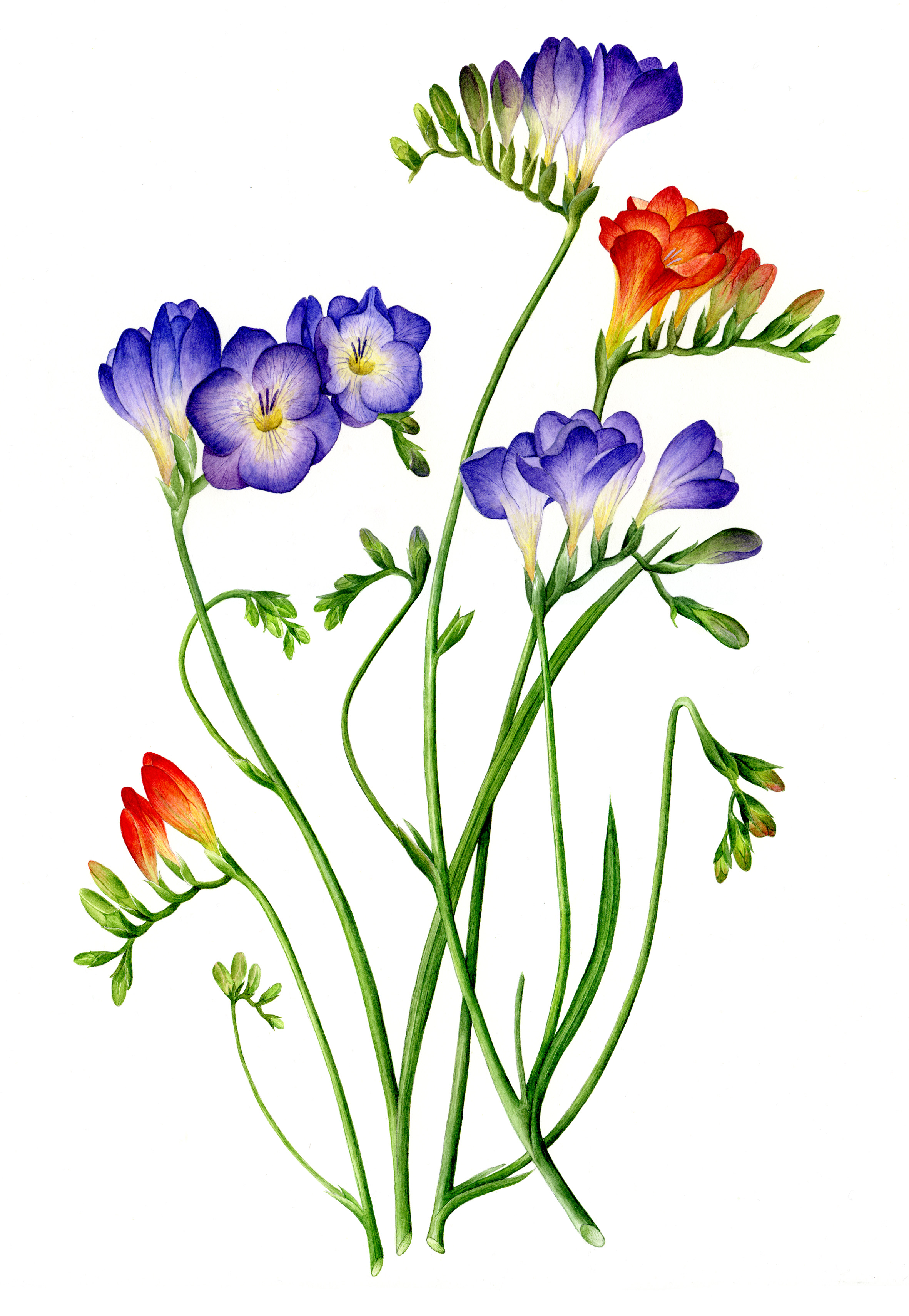 The Art Of Botanical Painting Book