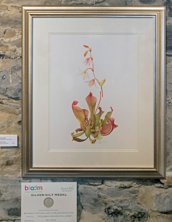 Heliamphora heterodoxa Sun Pitcher by Jane Stark Silver-gilt award at Bloom 2015. Photo © Bernard van Giessen
