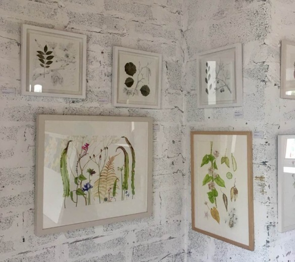 A small selection of paintings on view at Claregalway Castle Botanical Art Expo in July 2018